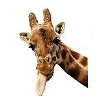 Giraffe  by aaronnaps
