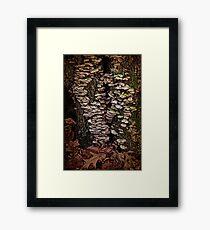 Shelf Fungus In Autumn Framed Print