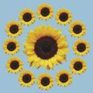Thirteen sunflowers by ProfessorM