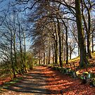 Platt Hill Lane by Tom Gomez