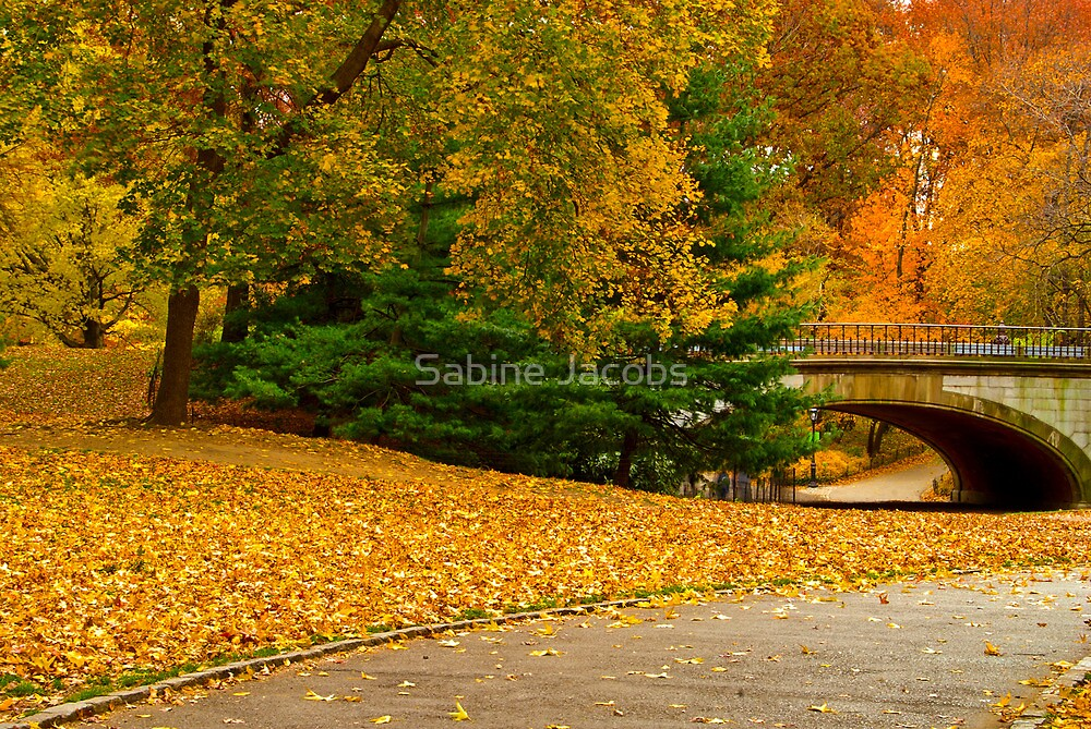 Fall in Central Park ~ New York City ~ USA by Sabine Jacobs