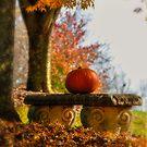 The Last Pumpkin by Lois  Bryan