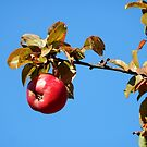 Apple - autumnal red by Babz Runcie