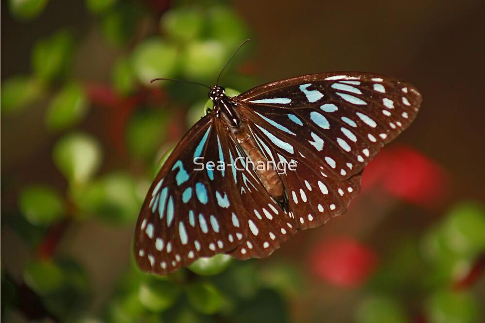Beautiful Blue Butterfly by Sea-Change