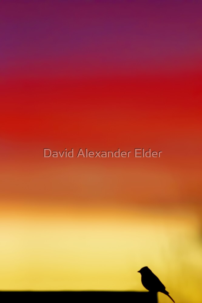 Dawn's Morning Chorus by David Alexander Elder