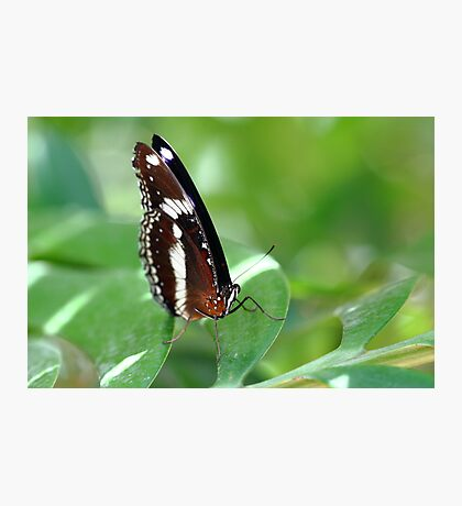 """Butterfly 3.0"" Photographic Print"