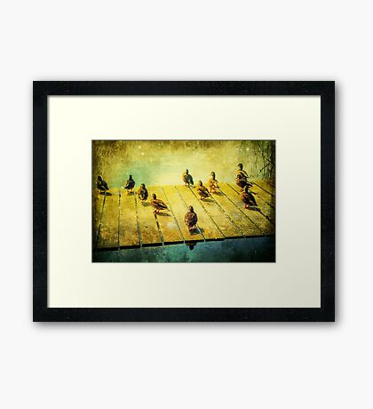 To Swim Or Not To Swim Framed Print