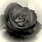 The Rose by deegarra