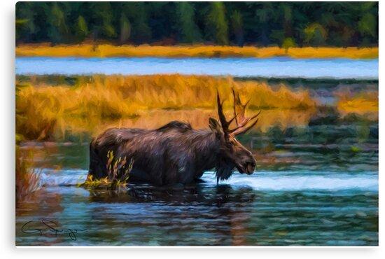 Algonquin Park Moose by faczen