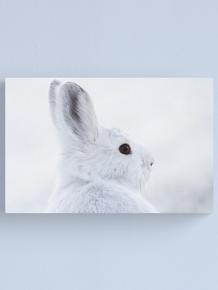 Alternate view of Snowshoe Hare Canvas Print