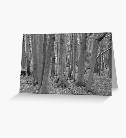 Woodland Whispers  Greeting Card