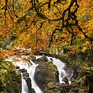 The Hermitage Dunkeld Perthshire Scotland by M.S. Photography/Art
