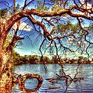 Mutton Swamp - Rupanyup by Jennifer Craker