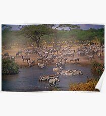 Serengeti Chaos Poster