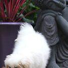Lucy  by Varinia   - Globalphotos