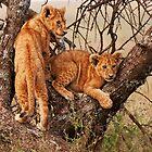 Playful Cubs by Rashid Latiff