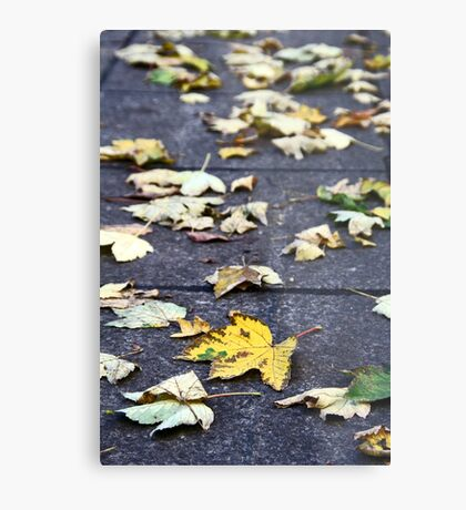 Yellow leaf, London 2010 Metal Print