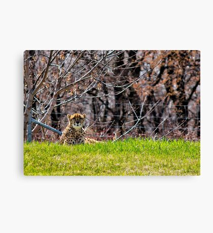 Majestic Cheetah Canvas Print