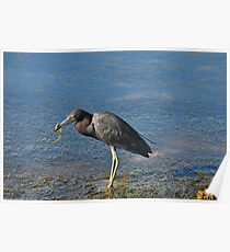 Blue Heron with Lunch Poster