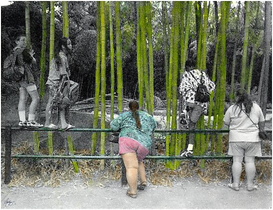At the Zoo - Who is Watching Who? by Wayne King