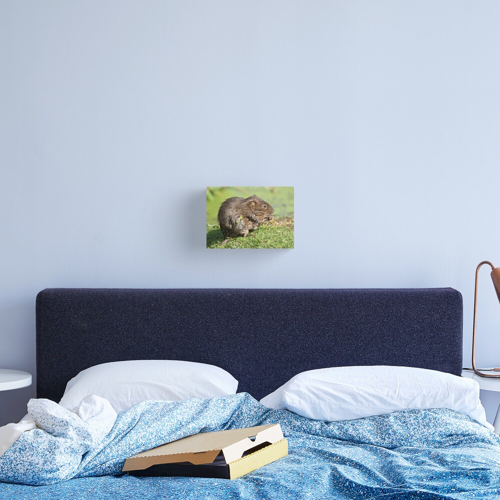 The verdant vole Canvas Print