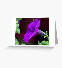 Touch of Mauve Greeting Card