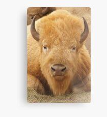 Lámina metálica White Buffalo