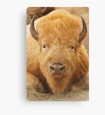 Lienzo White Buffalo