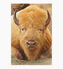 Lámina fotográfica White Buffalo
