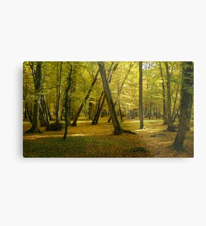 Autumn in the forest of Chenonceau Metal Print
