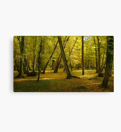 Autumn in the forest of Chenonceau Canvas Print