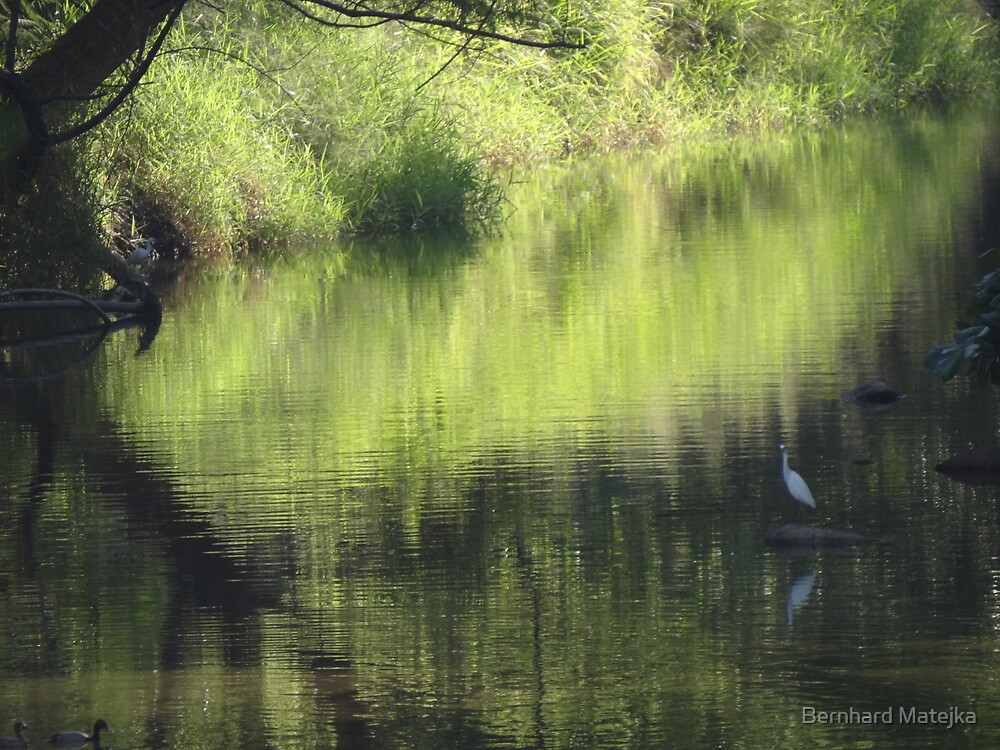 Riverscape with birds - Lado del rio con aves by Bernhard Matejka