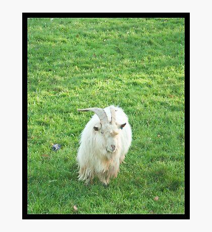 Devil Goat Photographic Print