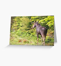 Bull Moose in Maine Greeting Card