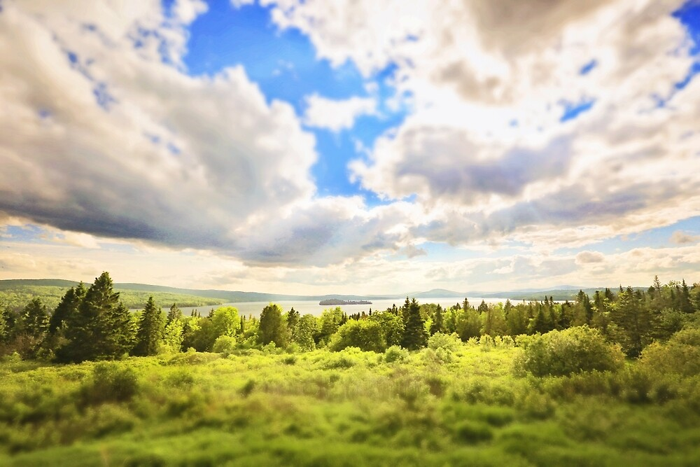 Sunny Lakeside Landscape by Sarah Van Geest