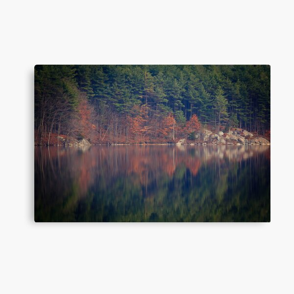 Rorschach Visits the Woods Canvas Print