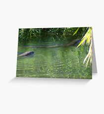 Otters in the tropical zone - Nutrias en la zona tropical Greeting Card