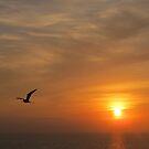 Frigate Bird in the Sun - Fregata en el Sol, Puerto Vallarta, Mexico by PtoVallartaMex