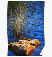 Rock with Grass Poster