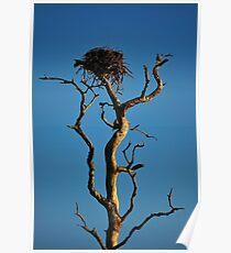 Bird Nest in Top of Tree Poster