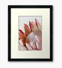 King Protea Framed Print