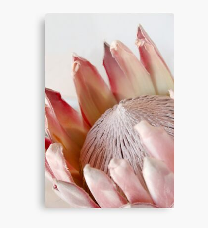 King Protea Metal Print