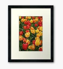 Keukenhof Tulips Framed Print