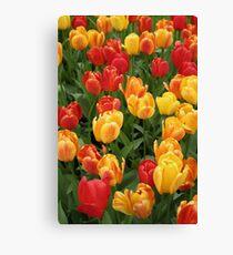 Keukenhof Tulips Canvas Print