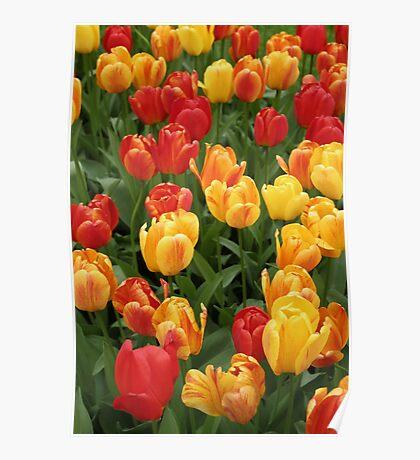 Keukenhof Tulips Poster