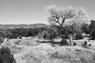 Dragonfly Trail ~ Southwest New Mexico by Vicki Pelham