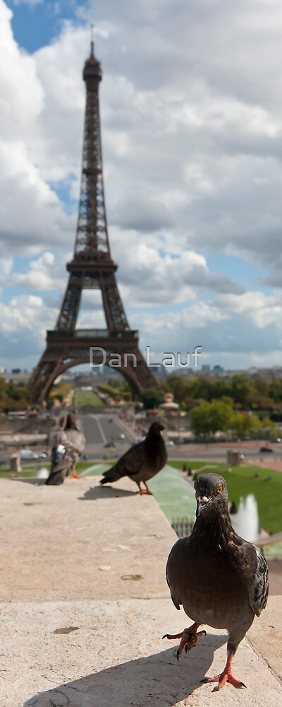 Curious Pigeon by Dan Lauf