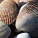 Shellfish by Randall Robinson