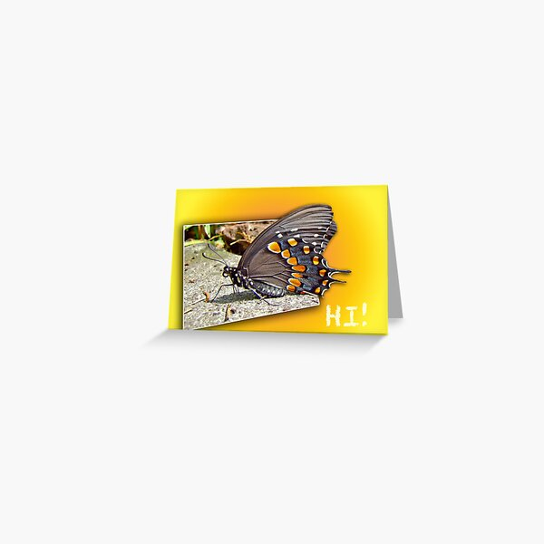 Hi - Hello - How Are You - Butterfly Greeting Greeting Card