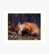 Curious Kit Fox Art Print